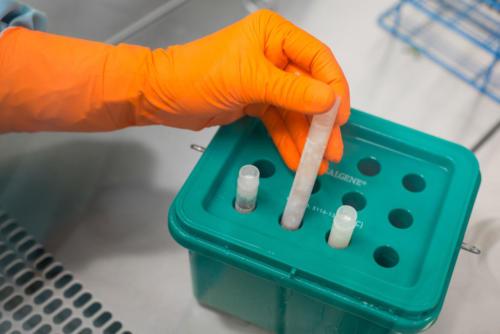 Příprava tkáně ke kryokonzervaci